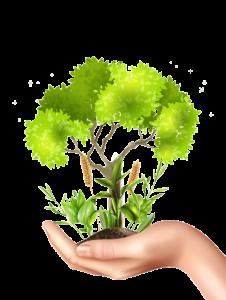 Imagen Respeto Medio Ambiente